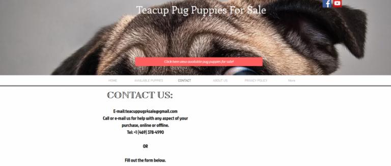 Teacup Pug Puppies 4 Sale, Herman Moore